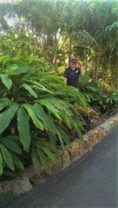 Hayman Gardener