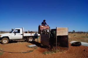 Bore Runner job on a cattle station