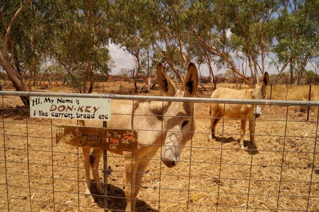 Banka Banka Station Northern Territory donkey
