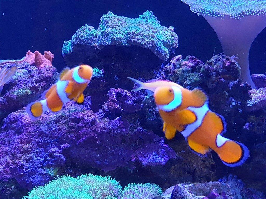 Big-4-helensvale fish tank nemo