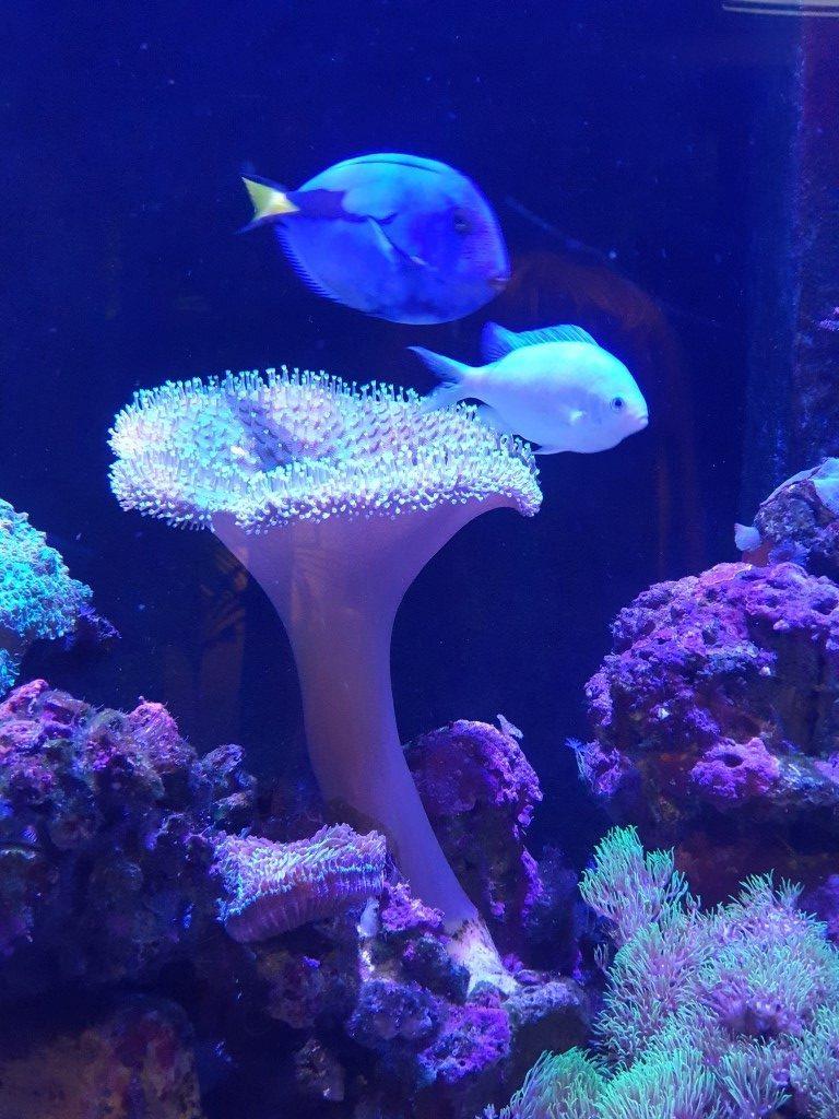 Big-4-helensvale fish tank