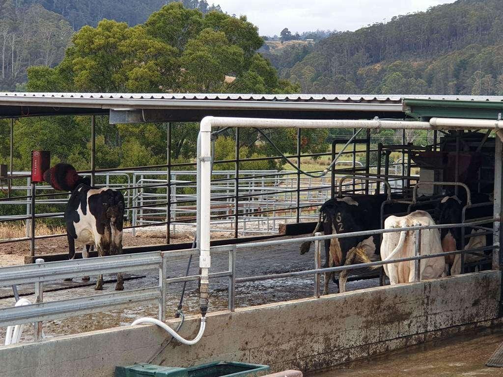 Pyengana Dairy & Holy Cow Cafe