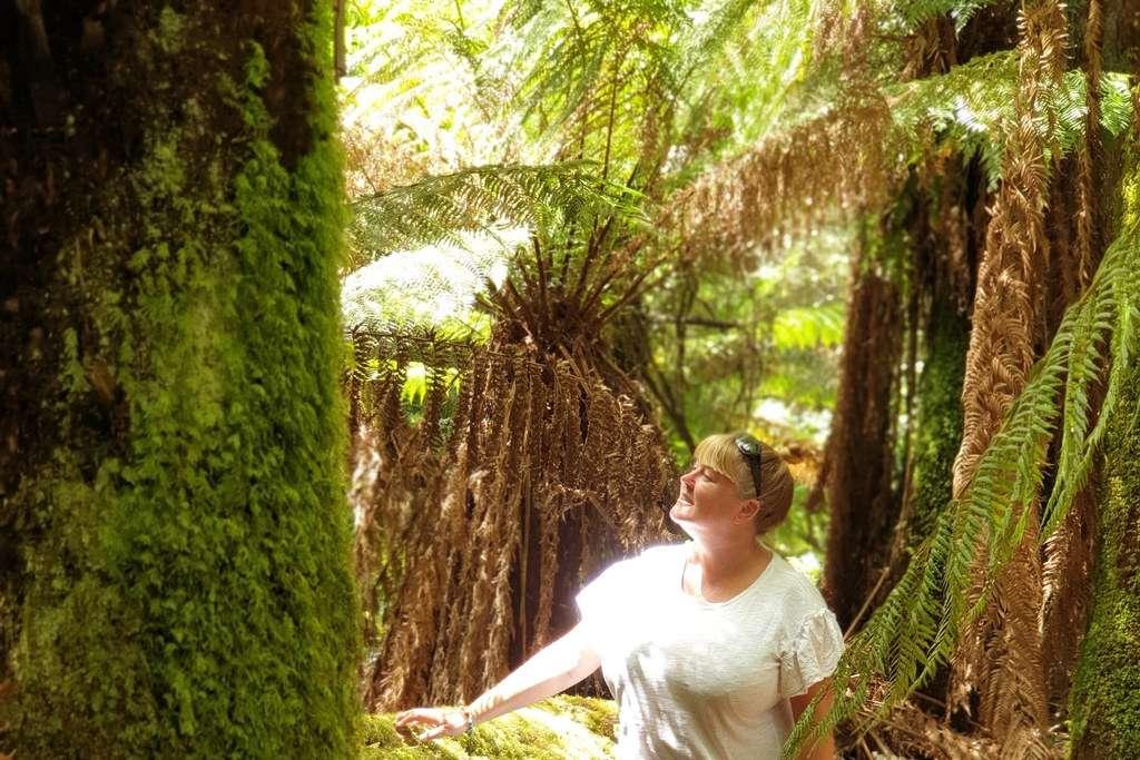 Weldborough Pass Rainforest walk