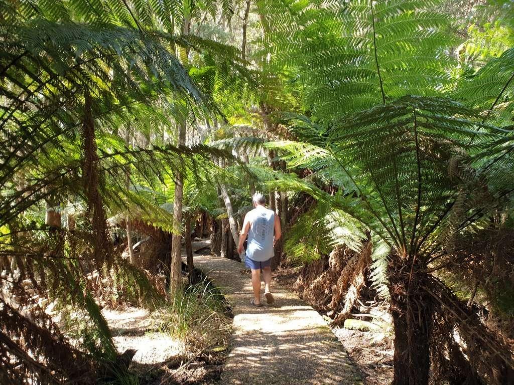 The Peoples Park Scottsdale Northeast Park Tasmania