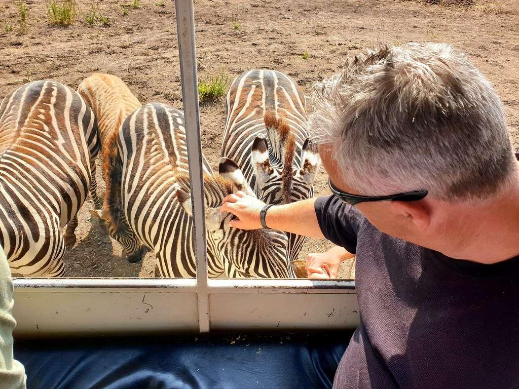 Zoodoo  Zoo Zebras Tasmania