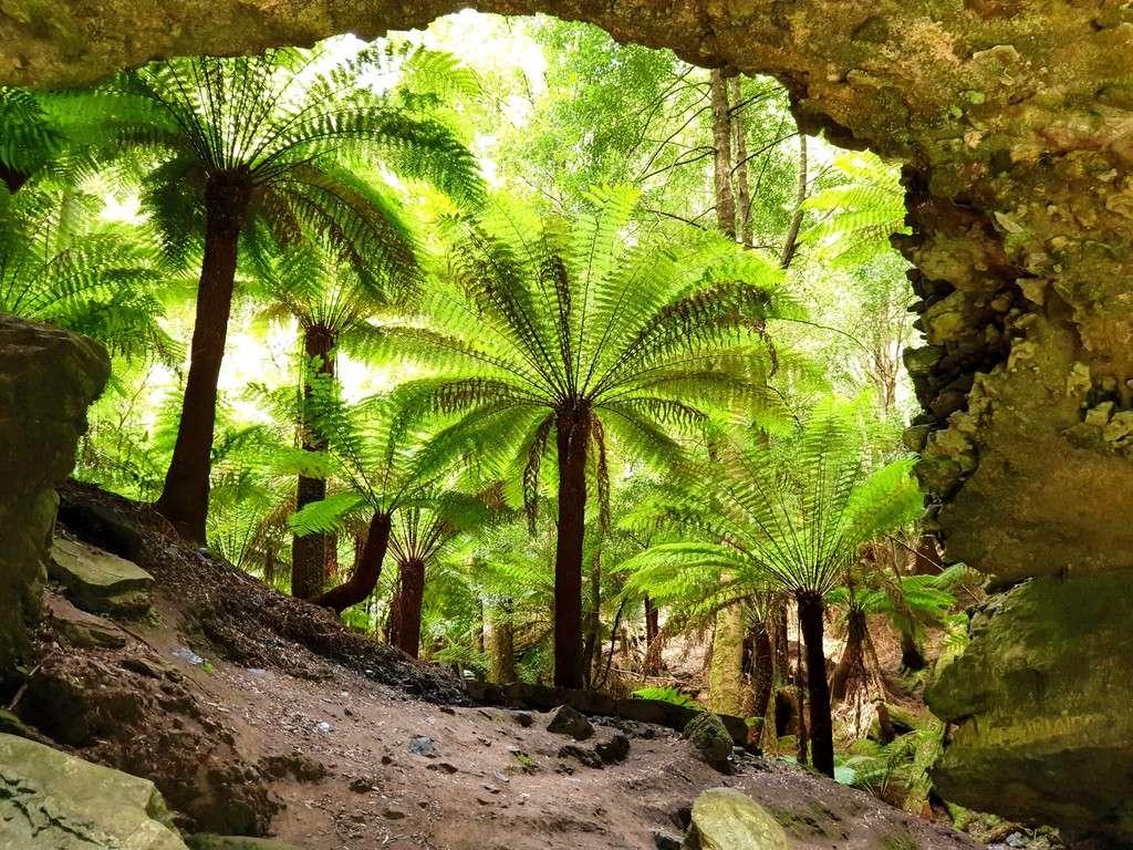 Trowutta Arch Sinkhole Tasmania