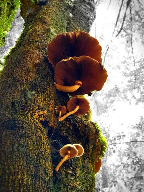 Trowutta Arch Sinkhole fungi