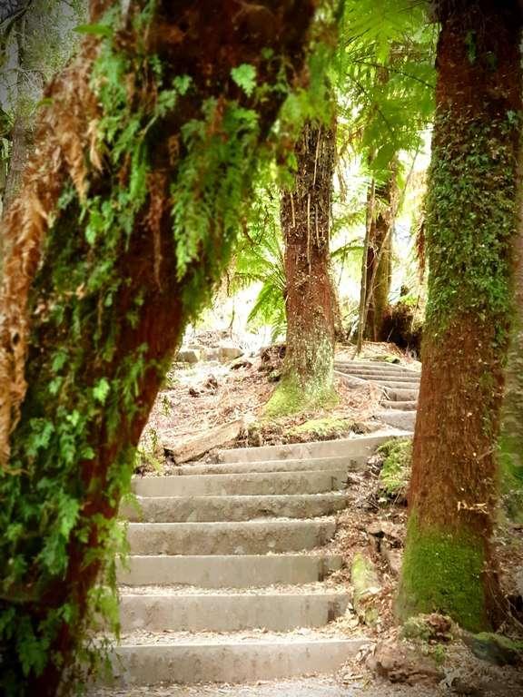 Trowutta Arch Sinkhole steps