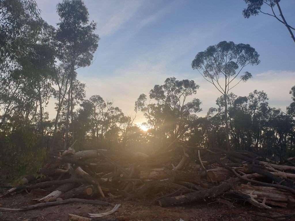 sunrise Tarnagulla Victoria