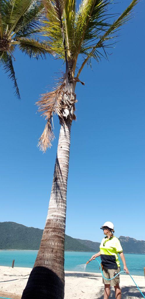 work as you travel full time caravanning remote island Hayman Island watering palm tree on beach